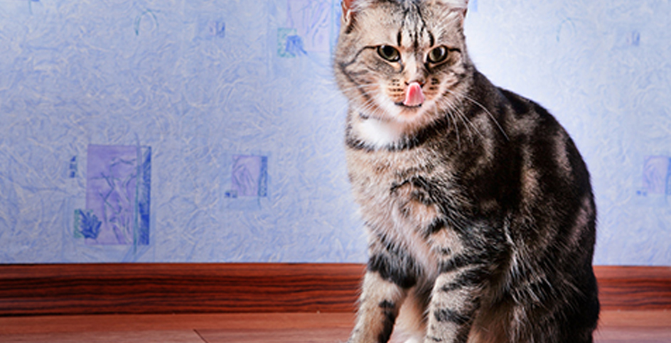 Health represents well-being in cats