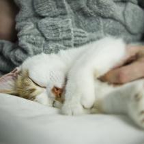 Por qué esterilizar a mi gato