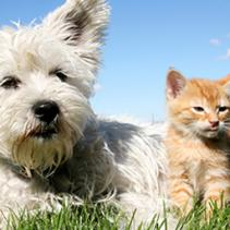 Vaccinating pets: prevention is better than a cure
