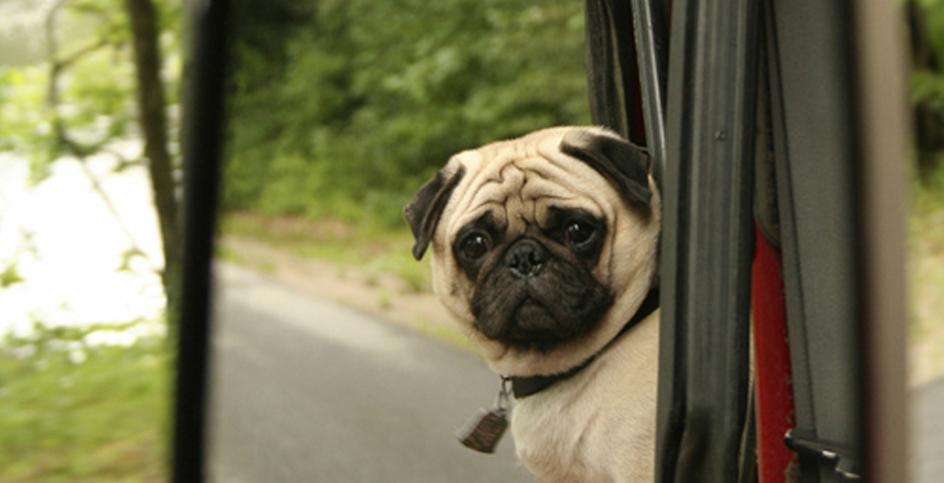 Il cane davanti allo specchio