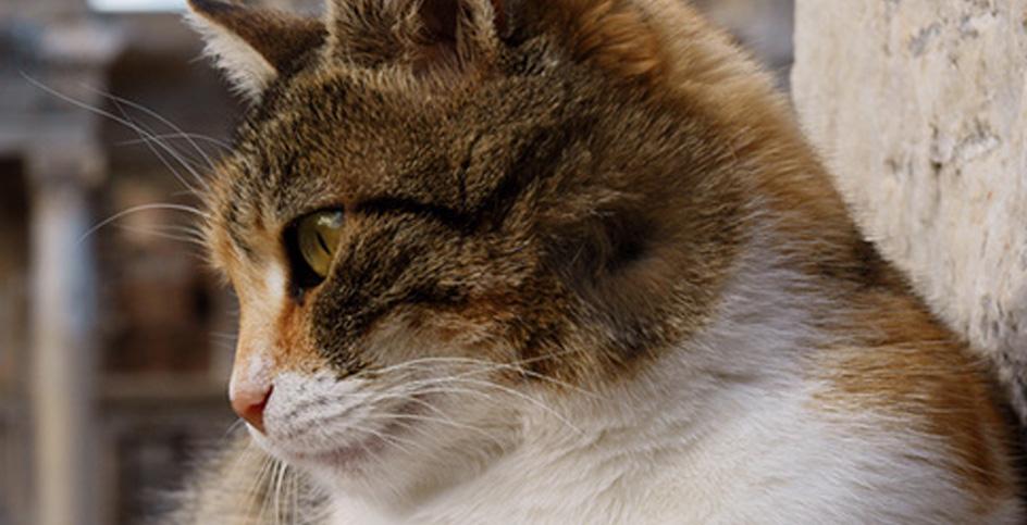 I gatti nella storia europea