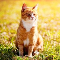 Cats and the formation of kidney stones