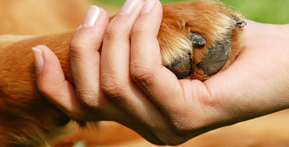 Acupuntura e homeopatia também nos animais
