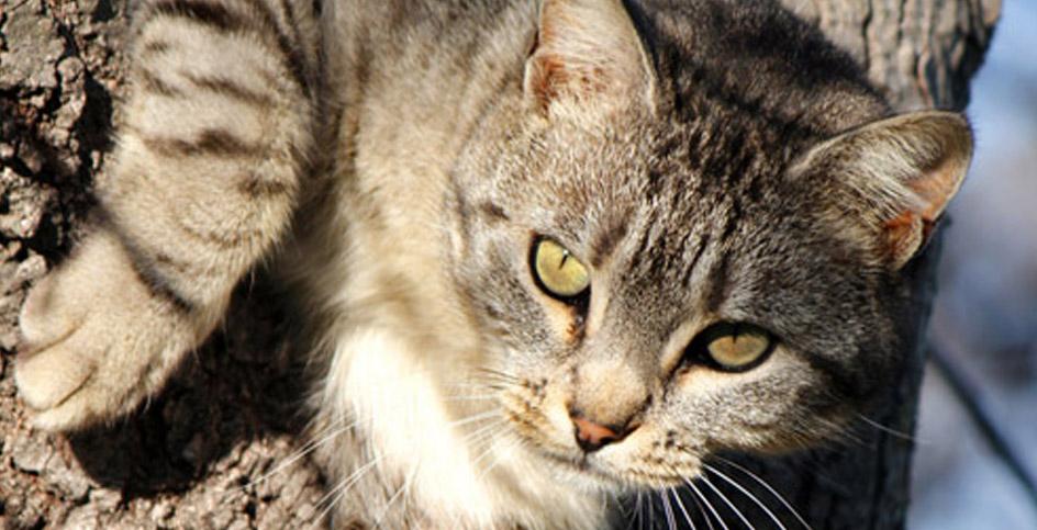 Gatos silvestres e gatos selvagens