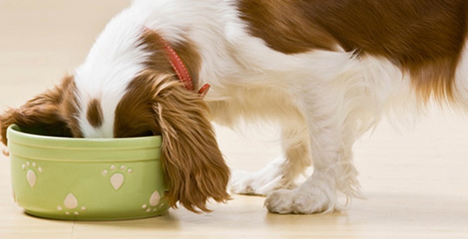 How to prevent cats and dogs from becoming overweight