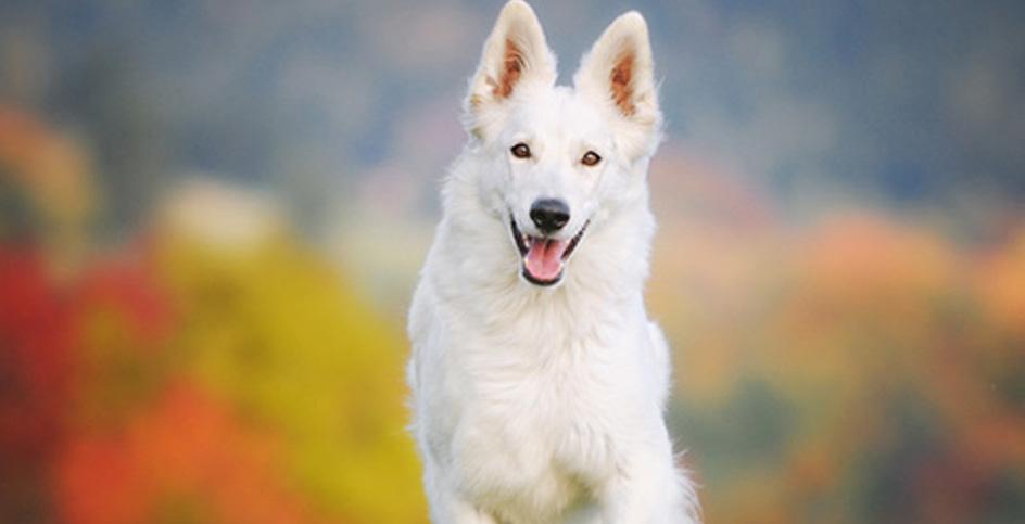 Собаки без ума от спорта