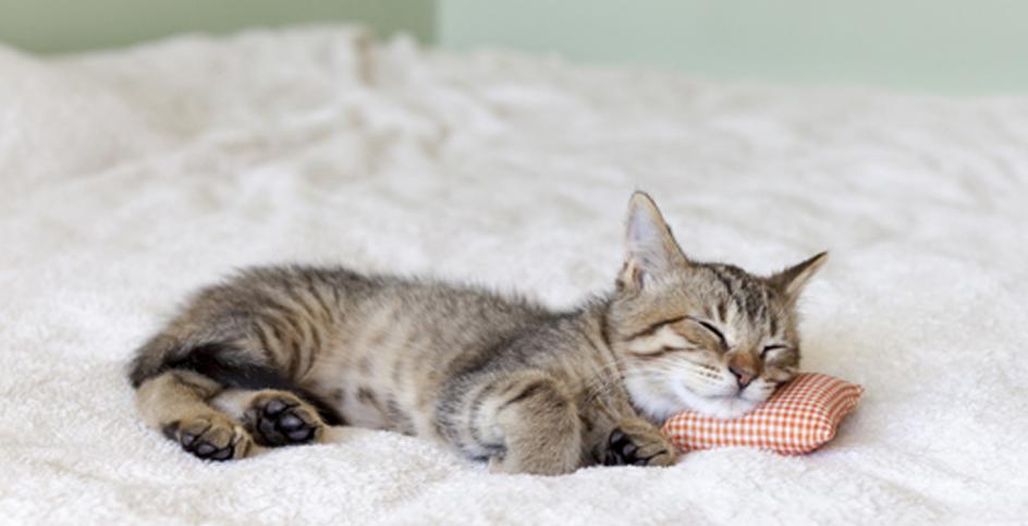 Symptoms of an ill cat