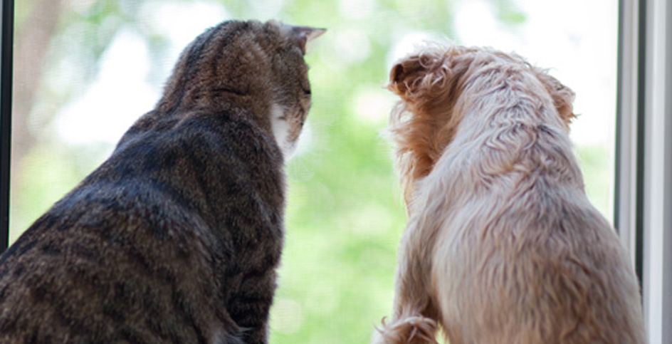 Дружеские отношения между кошкой и собакой
