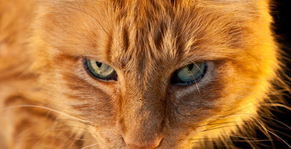 Кошки, их питание и капризы