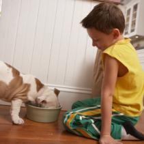 Por que um cachorro é adotado