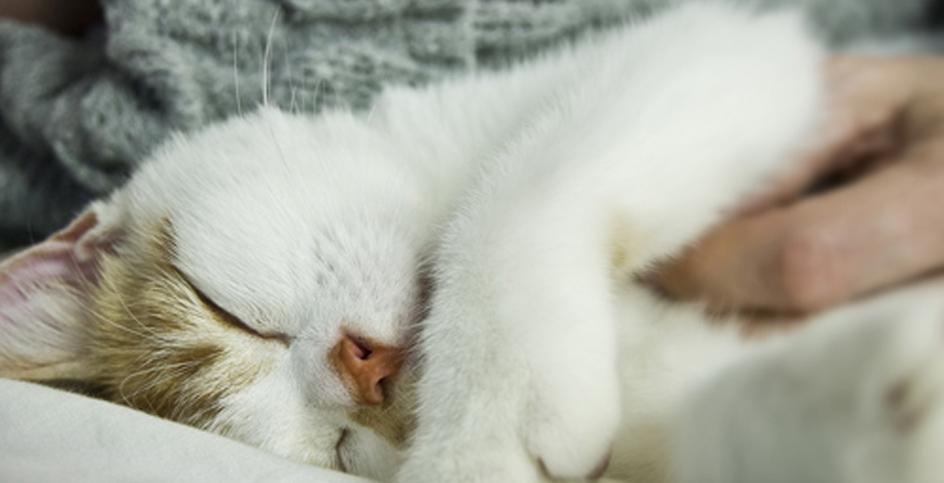 Зачем стерилизовать кошку?