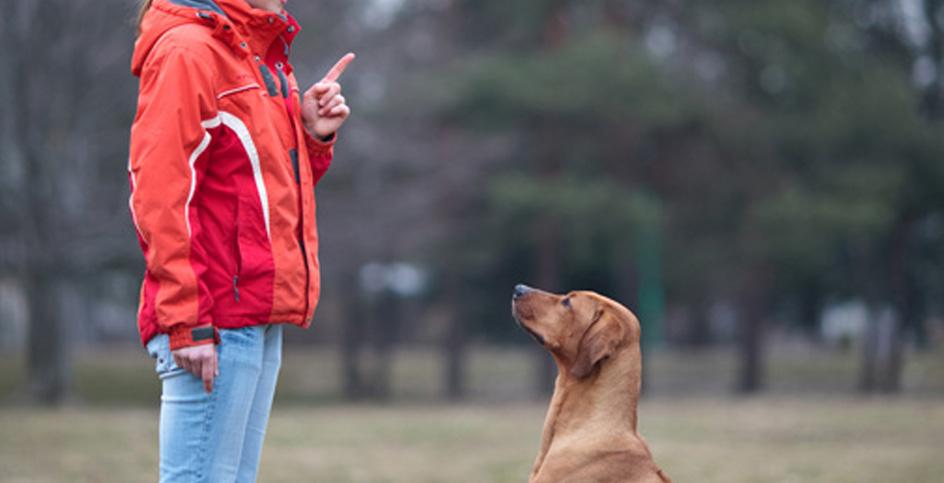 Comandi base per un cane ben educato