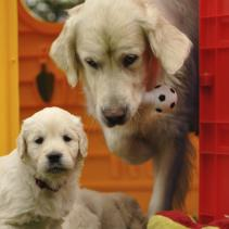 ¿Cachorro, adulto o senior?