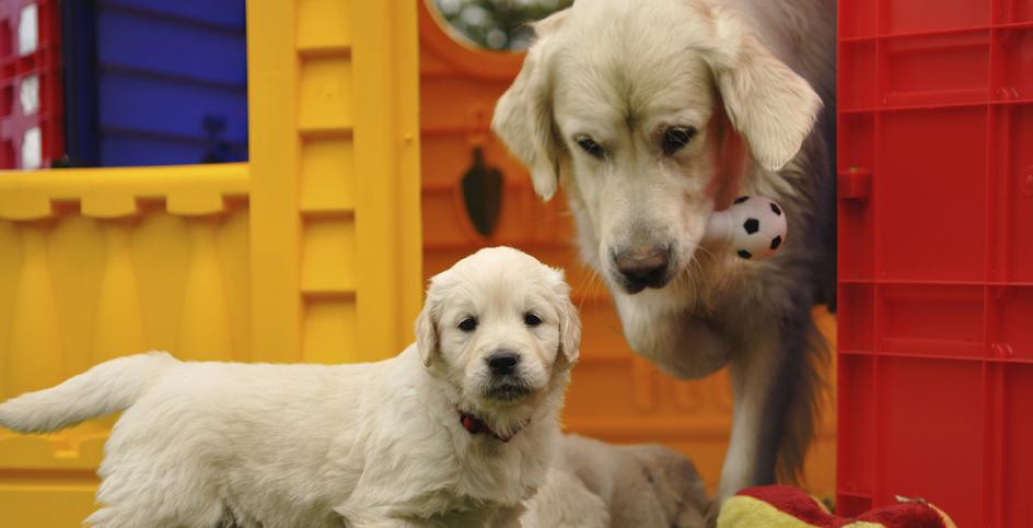 Welpe, ausgewachsener Hund oder Senior?