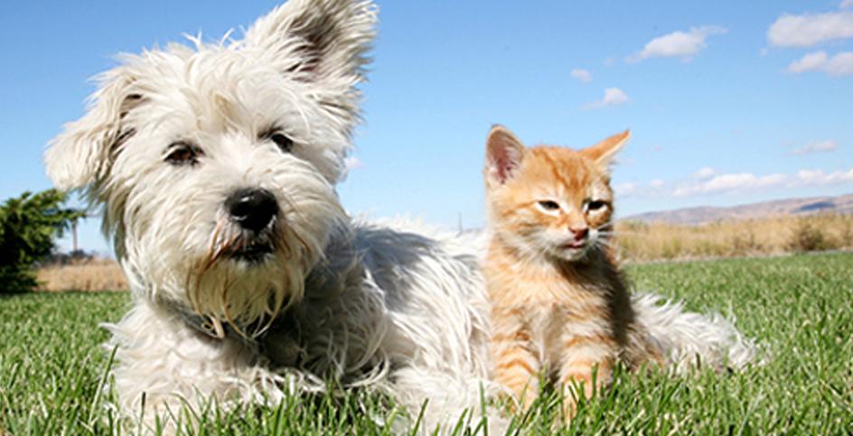 Vacciner les animaux de compagnie: mieux vaut prévenir que guérir