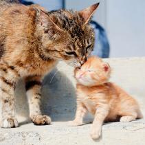 Os carinhos, uma forma de comunicação
