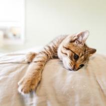 Prima e dopo la sterilizzazione del gatto
