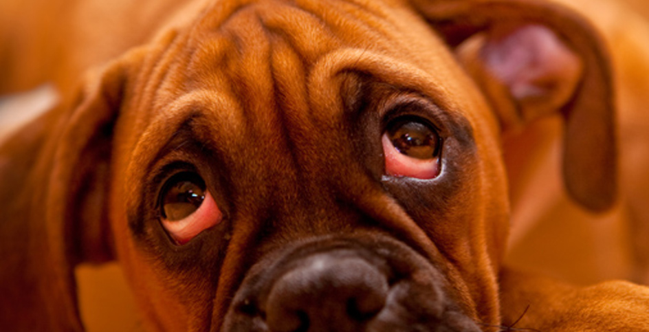 Le chien et les punitions qui n'ont aucun sens