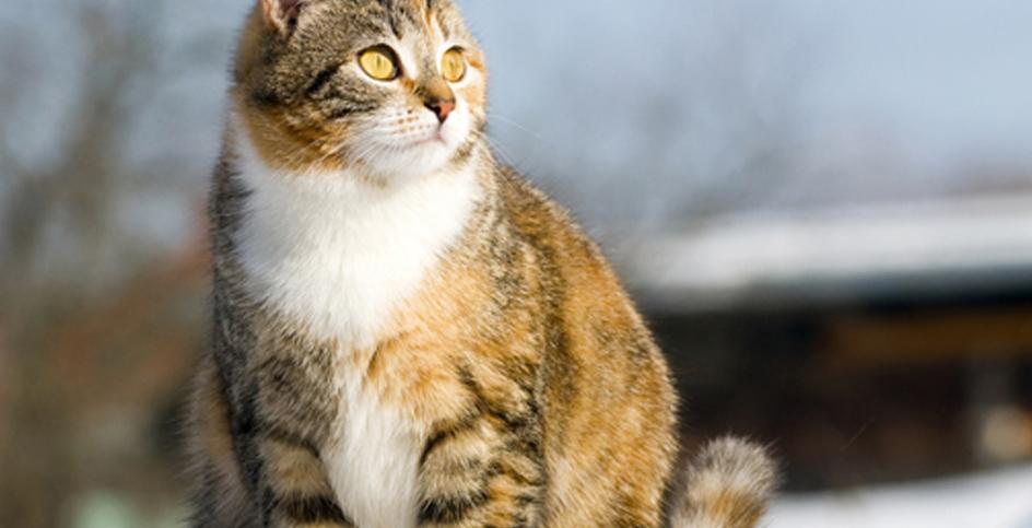 Питание во время беременности кошек.