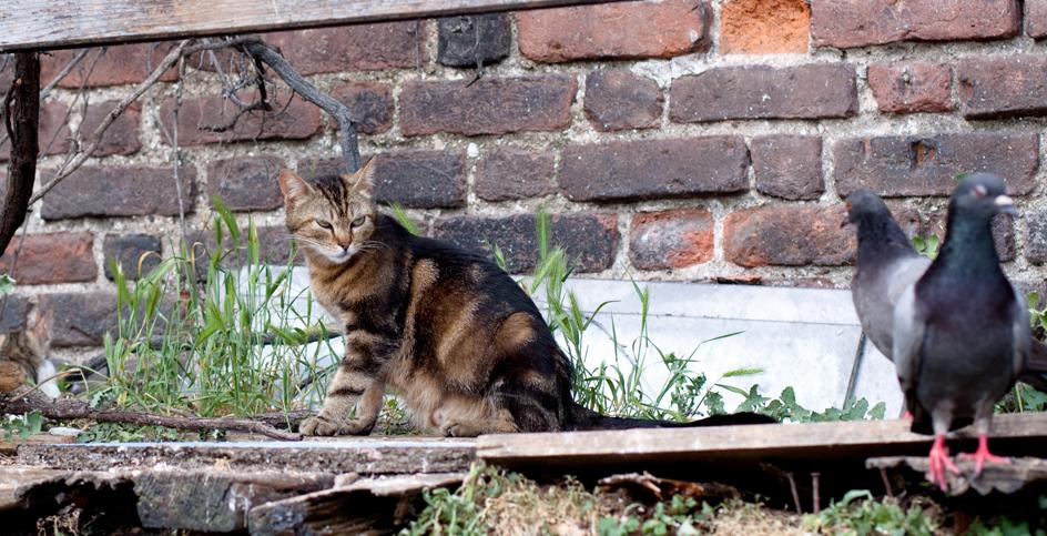 Diàleg entre un gat i un colom