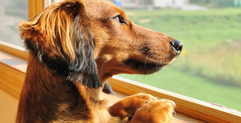Il cane che non desidera ricevere carezze