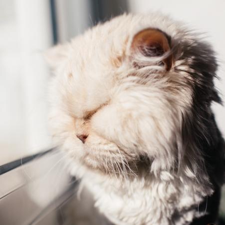 Veinte años no son pocos para una gata