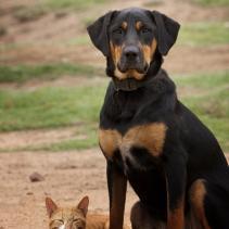 A esterilização de cachorros e gatos: mais prós do que contras