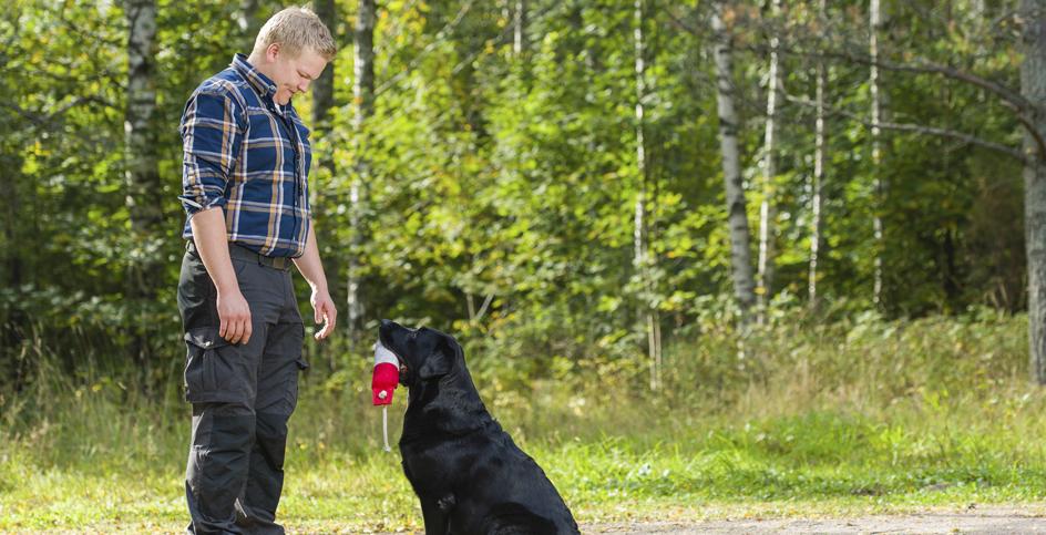 Com es tria un bon educador caní
