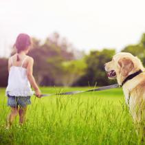 O treino positivo: muito além da obediência