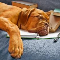 Dogs who can perform mathematical calculations