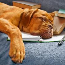 Cani che sanno fare calcoli matematici