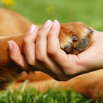 Acupuntura y homeopatía también para los animales