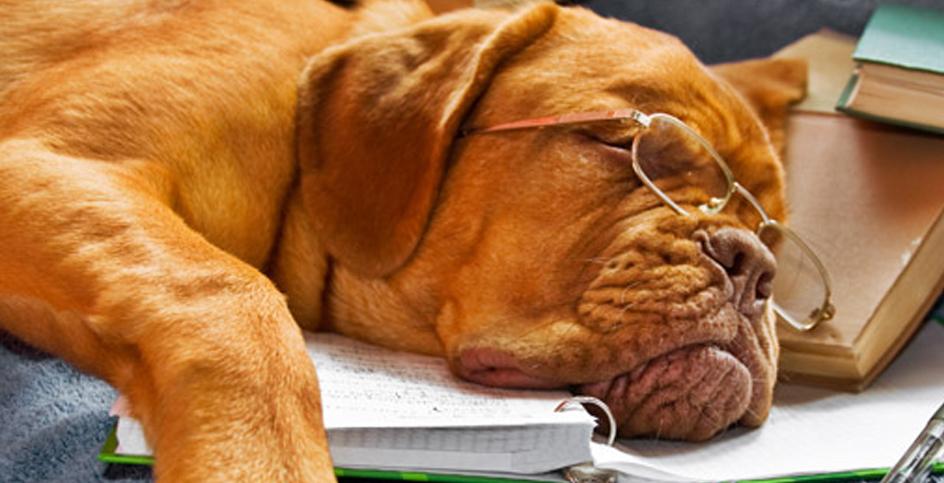 Los perros que saben hacer cálculos matemáticos