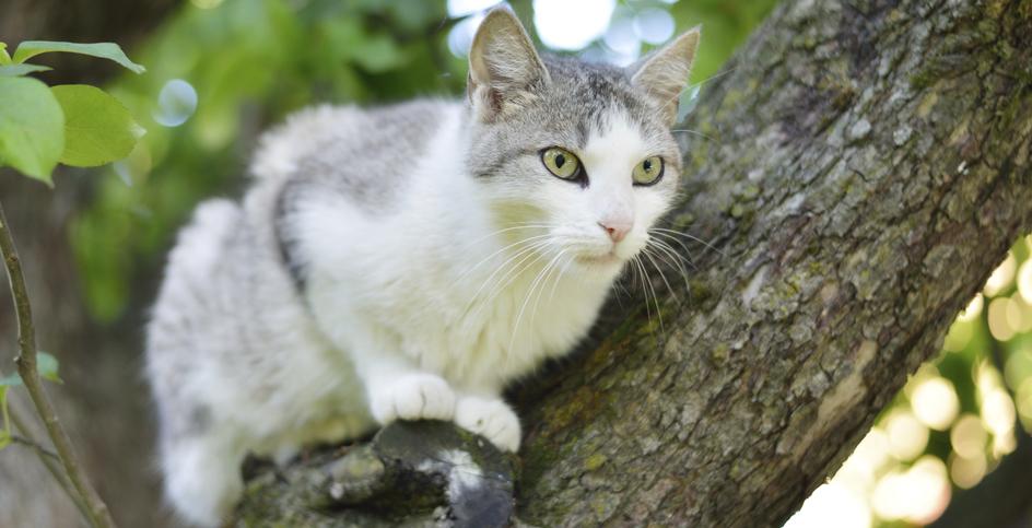 Una casa de ensueño para gatos