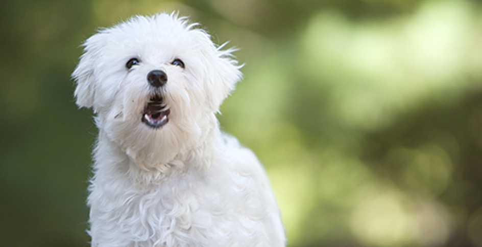 Was möchte der Hund mit seinem Bellen ausdrücken?