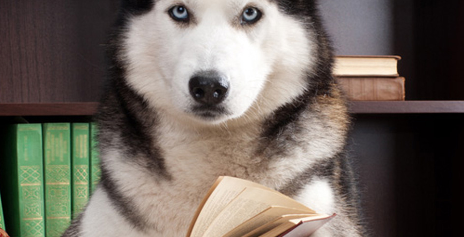 Do dogs understand English?