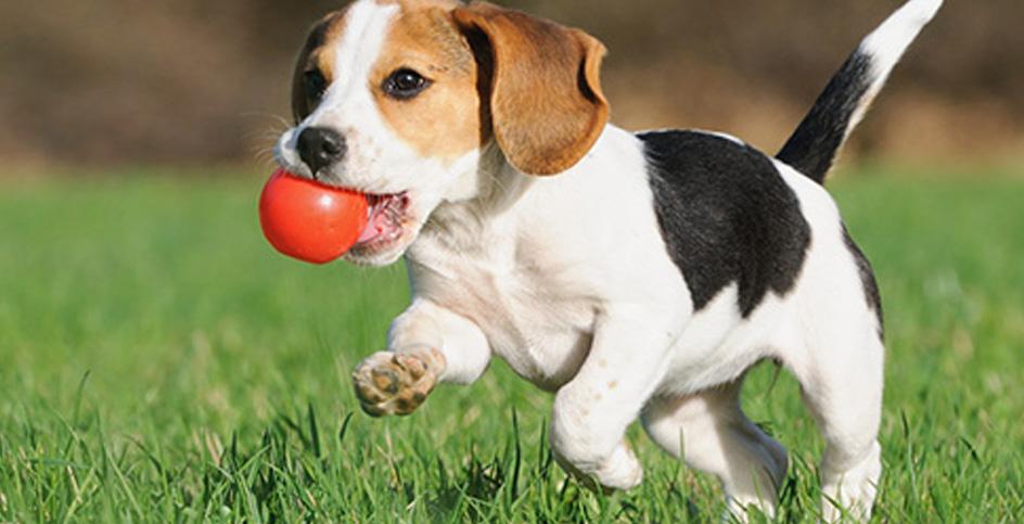 Важная роль игр для собаки
