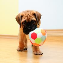 Puppies! Training begins!