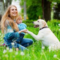 Comment saluer un chien inconnu