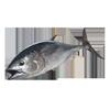 With tuna