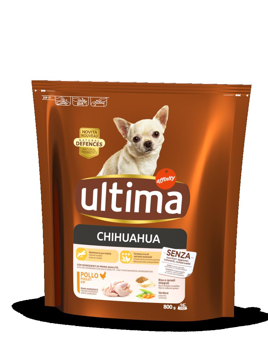 Mini Chihuahua con Pollo