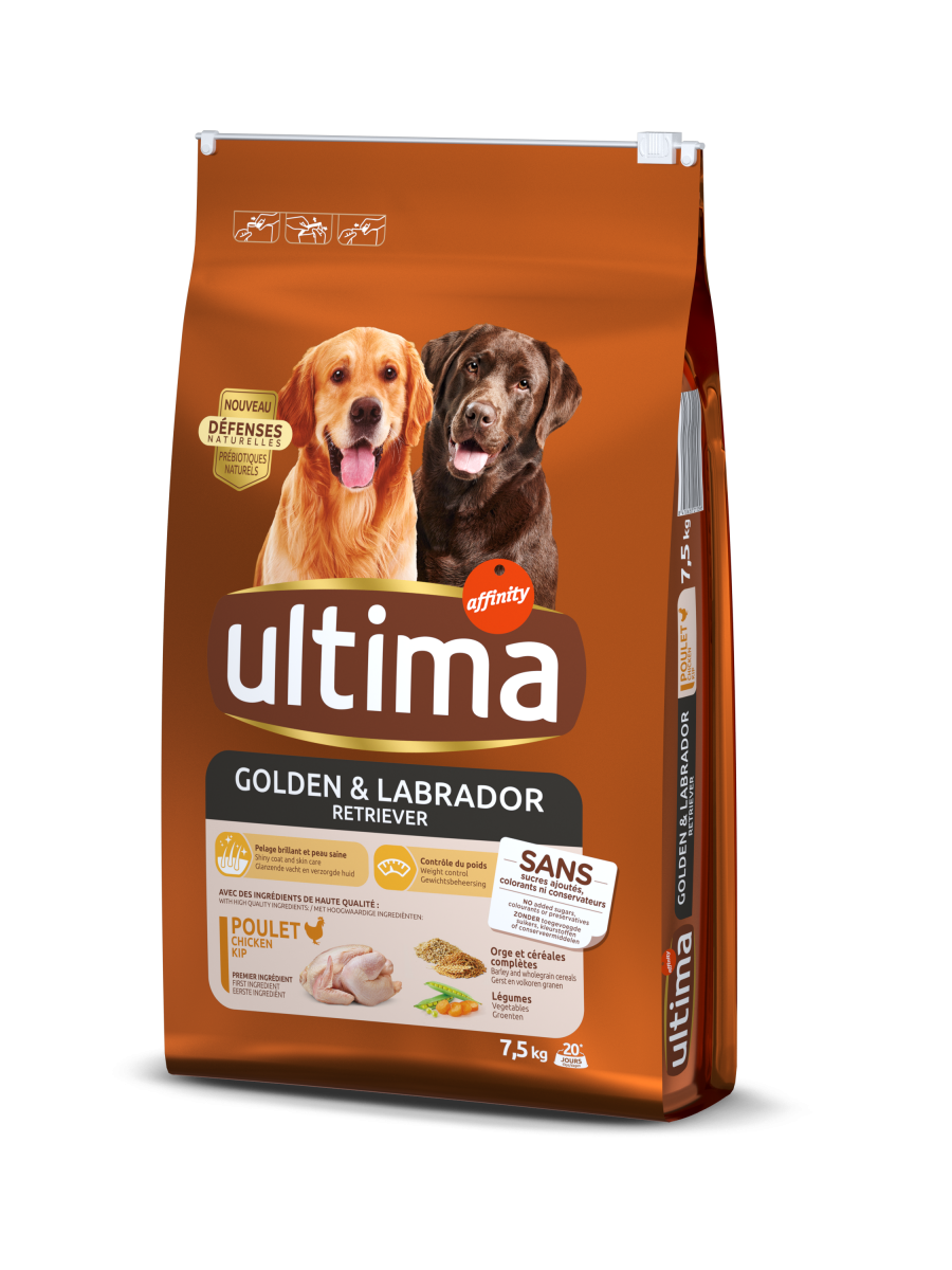 Medium-Maxi Golden & Labrador avec du Poulet