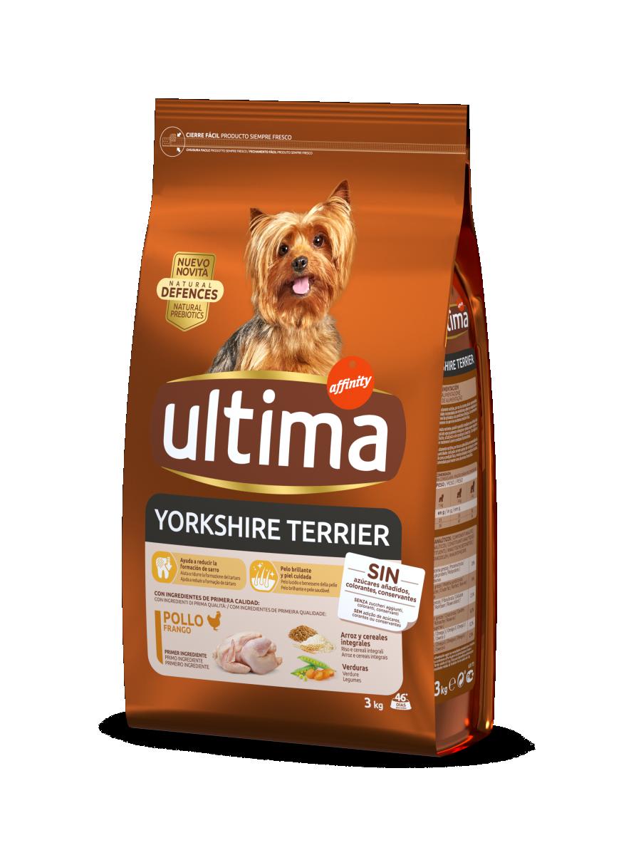 Mini Yorkshire Terrier amb Pollastre