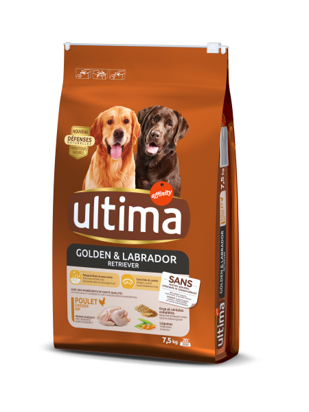 Medium-Maxi Golden & Labrador avec du Poulet