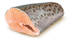 trout.png