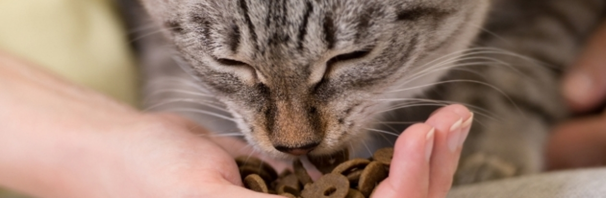 Ultimapedia, comment bien nourrir son chat stérilisé? Affinity Ultima