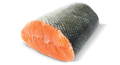 salmon.png