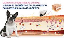 Nueva edición del curso de dermatitis purigininosa canina