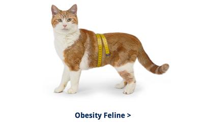 Banner Obesity Cat