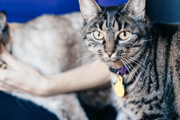 gastroenteritis gatos sintomas